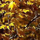 Reminder of Fall by Matthew Hutzell