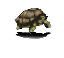 Tortugona by Lightemp