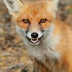 Cheeky fox by Mariann Rea