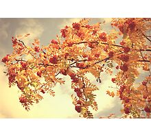 Shining autumn day Photographic Print
