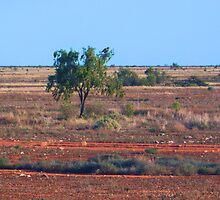 Nullarbor Desert by Yukondick