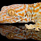 Reflections of a tokay gecko by Angi Wallace