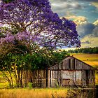 Jacaranda... by tracielouise