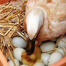 A Mothers Kiss  ~ Newborn Duckling ~ by Kym Bradley