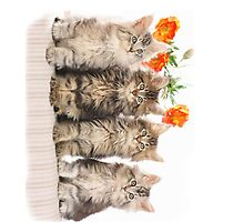 Kittens & Flowers by TinaGraphics