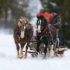 Sleigh ride delight by Kelly  McAleer