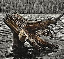 Grassy Lake Stump by thecameraman