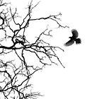 Branching Out by Chris Kean
