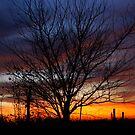 Halloween Sunset Tree 2012 by agenttomcat