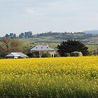 Field of Canola, Conara, Tasmania by Wendy Dyer
