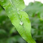 Leaf With Water Droplets by Cole Palmer