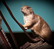 Gopher On Blue by jphphotography