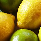 Lemons & Limes by TinaGraphics