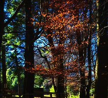 Copper beeches by phonepatterns