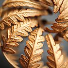 Bracken Fern by LittleBlueWren