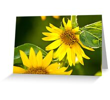 A Bee And Crab Spider On A Beautiful Organic Sunflower Greeting Card