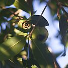 Amidst the Leaf Foliage Rose Apples Grow by Kerryn Madsen-Pietsch
