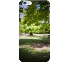 Sunlit tree in wood iPhone Case/Skin