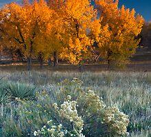 First Light Of Fall by John  De Bord Photography
