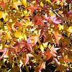 Fall Leaves by Kidono-chan