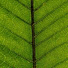 The veins and life of nature  by k-s-photography