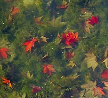 Leaves Underwater by Sue Robinson
