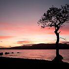 Milarochy Bay Tree at Sunset by Rachel Slater