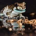 hungry milk frog by AngiNelson