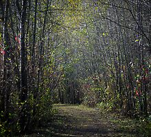 The Path by Sheri Bawtinheimer