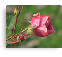 Autumnal Rose Canvas Print