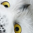 Snowy Owl Eyes by pjwuebker
