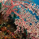 Among the corals, Wakatobi National Park, Indonesia by Erik Schlogl