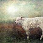 The Little White Bull by polly470