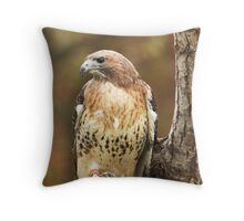 Broad Winged Hawk ~ Throw Pillow