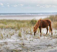 Ponies of Assateague Island by Monte Morton