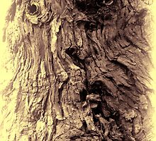 Tree Face by Heike Richter