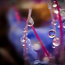 Wee Little Dew Drops by Handy Andy Pandy