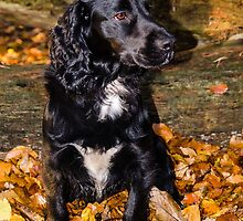 Scooby in Autumn leaves by JEZ22