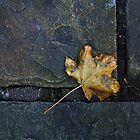 Autumn Leaf by David W Bailey