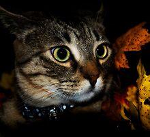 Miss October by jodi payne