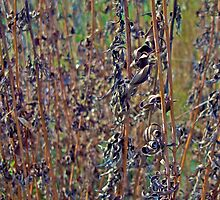 Prairie Plants by Scott Johnson