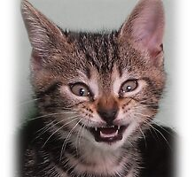 Cute kitten (Tyger) smiling by Christopher Ware