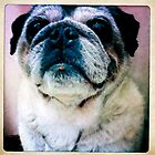 Inquisitive Pug by FesterLover