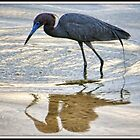 Small Blue Heron by Mikell Herrick