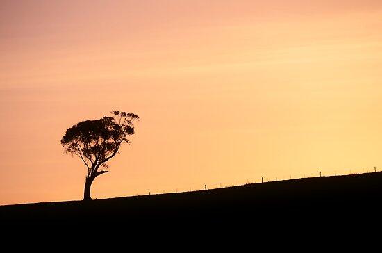 mellow evening by Georgie Hart