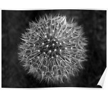 Dandelion Dream Poster