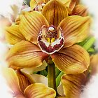 Yellow Orchid by Katherine Bowden