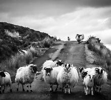Traffic Jam, Scottish Highlands by JourneyPhotos
