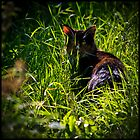 A Cat in the Field by johnjgt