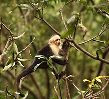 Monkey by johnnycuervo